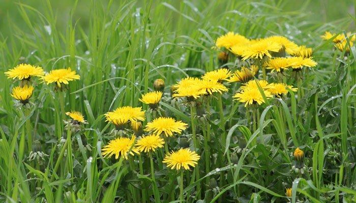 Fortalezca sus defensas inmunitarias con plantas