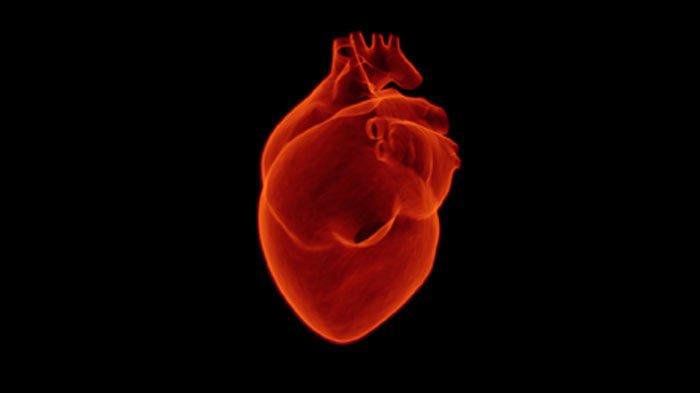 Taurina y corazon